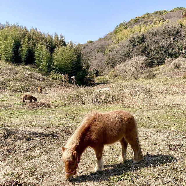 Ushimado Horse Village 牛窓自然牧場